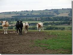 century cows train nr Ashendon