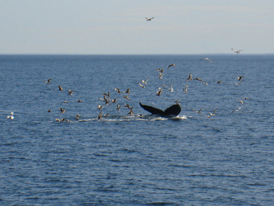 Whale_and_birds_010507_copy_8